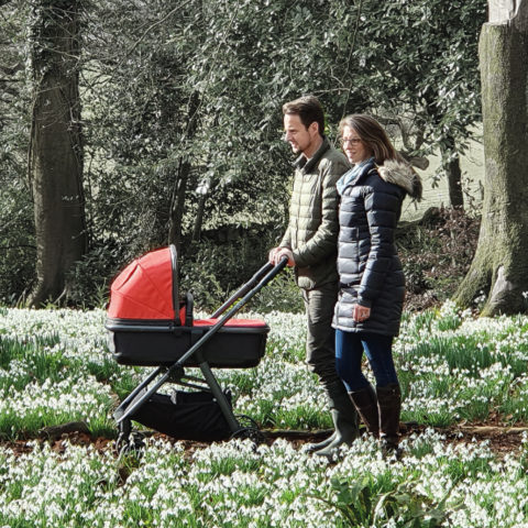 Ark Travel System in Coral